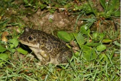Inventaire des Amphibiens et Reptiles du Poitou-Charentes