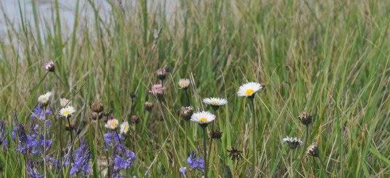 Zone Naturelle d'Intérêt Ecologique, Floristique et Faunistique (ZNIEFF)