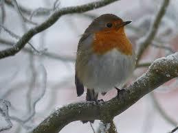 Le programme d'Atlas des Oiseaux en hiver en Poitou-Charentes