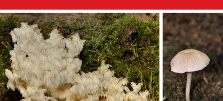 Liste rouge des Champignons du Poitou-Charentes